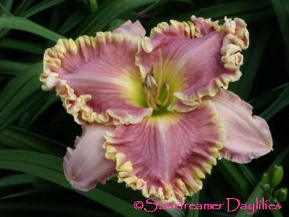 AnneMcWilliams[1]